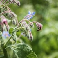 """Fattoria Scaldasole sostiene il progetto """"Bee my Future"""" A fianco di LifeGate, per promuovere la sopravvivenza delle api e garantire un futuro alla nostra sicurezza alimentare"""