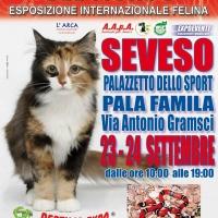 I GATTI PIU' BELLI DEL MONDO al PalaFamila di SEVESO - Esposizione Internazionale Felina