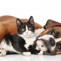 Noi di Easyfarma ti consigliamo l'uso degli oli essenziali per curare i vostri animali.
