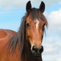Il mantello del cavallo