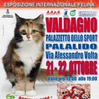 I GATTI PIU' BELLI DEL MONDO al PalaLido di VALDAGNO - Esposizione Internazionale Felina