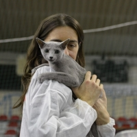 Expo felina, che successo! Oltre 3.000 ingressi nel weekend