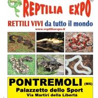 L'affascinante mondo dei rettili in mostra al Palazzetto dello Sport di PONTREMOLI (Ms)
