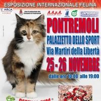 I GATTI PIU' BELLI DEL MONDO al Palazzetto dello Sport di PONTREMOLI - Esposizione Internazionale Felina