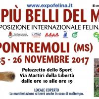 Sabato 25 e domenica 26 Novembre il Palazzetto dello Sport di PONTREMOLI (Ms) ospiterà  I Gatti Più Belli del Mondo e i Rettili più Affascinanti della Terra.
