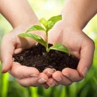 Acquistiamo la nostra verdura al campo, addio filiera!