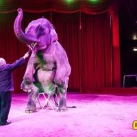 Per la prima volta nel Salento il Circo Amedeo Orfei