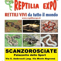 REPTILIA EXPO - L'affascinante mondo dei rettili arriva a Bergamo presso il Palazzetto dello Sport di Scanzorosciate