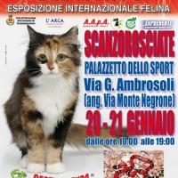 I GATTI PIU' BELLI DEL MONDO al Palazzetto dello Sport di SCANZOROSCIATE (Bergamo)- Esposizione Internazionale Felina