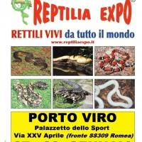 REPTILIA EXPO: l'affascinante mondo dei rettili al Palazzetto dello Sport di Porto Viro
