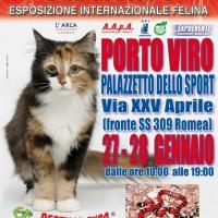 I GATTI PIU' BELLI DEL MONDO al Palazzetto dello Sport di PORTO VIRO (Rovigo) - Esposizione Internazionale Felina