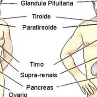 Il sistema endocrino