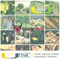 Corso di degustazione a Roma: la passione per il vino in 7 incontri