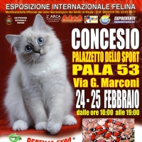 L'affascinante mondo dei rettili in Mostra al Pala 53 di Concesio (Brescia)