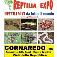 REPTILIA EXPO: l'affascinante mondo dei rettili al Palazzetto dello Sport di Cornaredo (Milano)