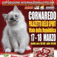 I GATTI PIU' BELLI DEL MONDO al Palazzetto dello Sport di CORNAREDO (Milano) - Esposizione Internazionale Felina
