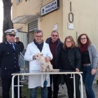 Mariglianella: Comune e Asl Na 3 Sud insieme per incrementare le iscrizioni all'Anagrafe Canina.