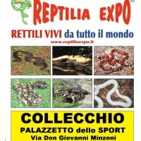 REPTILIA EXPO: l'affascinante mondo dei rettili al Palazzetto dello Sport di Collecchio - Parma