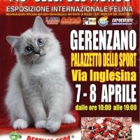 I GATTI PIU' BELLI DEL MONDO al Palazzetto dello Sport di GERENZANO (VA) - Esposizione Internazionale Felina