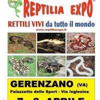 L'affascinante mondo dei rettili in Mostra al Palazzetto dello Sport di GERENZANO (Va)
