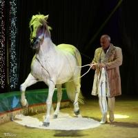 Allegria, divertimento e forti emozioni è lo show del Circo Lidia Togni
