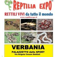 L'affascinante mondo dei rettili  in mostra al Palazzetto dello Sport di VERBANIA