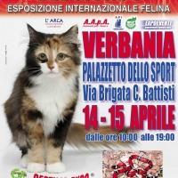 I GATTI PIU' BELLI DEL MONDO al Palazzetto dello Sport di VERBANIA - Esposizione Internazionale Felina