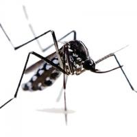 La Malaria - Conoscerla meglio