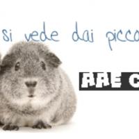 Associazione Animali Esotici Onlus: non valutiamo la partecipazione agli eventi in base alla visibilità che ci potrebbero dare ma al fatto che siano garantite le condizioni di benessere degli animali