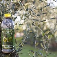 Affrontare l'autunno facendo il pieno di antiossidanti:  dalla natura ci viene in aiuto l'Infuso di Foglie d'Olivo