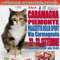 I GATTI PIU' BELLI DEL MONDO - Esposizione Internazionale Felina - a CARAMAGNA PIEMONTE
