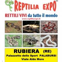 L'affascinante mondo dei rettili in mostra al Palazzetto dello Sport di Rubiera il 29 e 30 settembre
