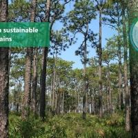 Continuano i progressi verso gli obiettivi di sostenibilità 2020 di Brambles