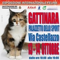 I GATTI PIU' BELLI DEL MONDO - Esposizione Internazionale Felina - a GATTINARA