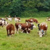 AGER e ARAP insieme per lo sviluppo e l'applicazione di progetti innovativi di ricerca nel settore lattiero-caseario