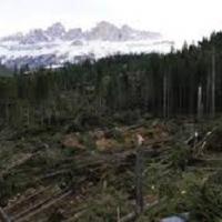 Parassiti del legno: ecco come il maltempo può favorirne la proliferazione