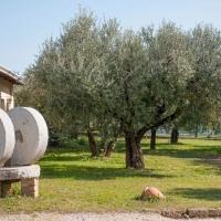 Nuovo successo per il Veneto Valpolicella DOP di Frantoio Bonamini premiato dalla Guida Flos Olei 2019