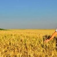 Agricoltura e giovani, in Italia un connubio vincente