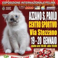 I Gatti Più Belli del Mondo in passerella al Centro Sportivo di Azzano San Paolo - Bergamo