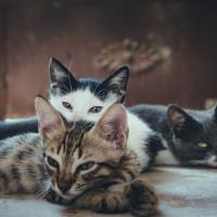 33 gatti in casa, donna condannata per abbandono di animali