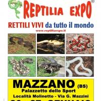 L'affascinante mondo dei rettili in Mostra al Palazzetto dello Sport di Mazzano (Brescia)