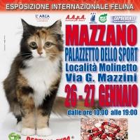 I Gatti Più Belli del Mondo in passerella al Palasport di Mazzano (Brescia)