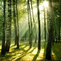 Legno da foreste certificate: una risposta eco per l'arredo