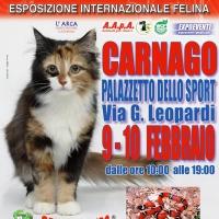 I GATTI PIU' BELLI DEL MONDO in passerella al Palazzetto dello Sport di CARNAGO (Varese)