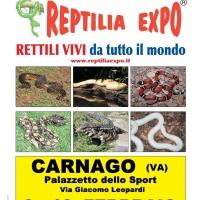 L'affascinante mondo dei rettili in Mostra al Palasport di CARNAGO (Va)