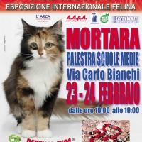 I Gatti Più Belli del Mondo in passerella a Mortara (Pavia)