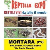 L'affascinante mondo dei rettili in Mostra alla palestra delle Scuole Medie di MORTARA