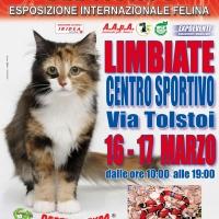 I Gatti Più Belli del Mondo in passerella al Centro Sportivo di LIMBIATE)