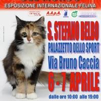 I Gatti Più Belli del Mondo, per la prima volta, al Palazzetto dello Sport di Santo Stefano Belbo (Cn)