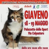 I Gatti Più Belli del Mondo al palasport di Giaveno